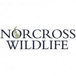 Norcross